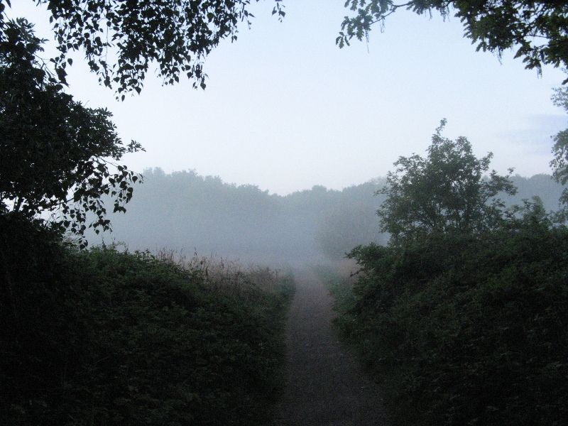 Mist over The Fen
