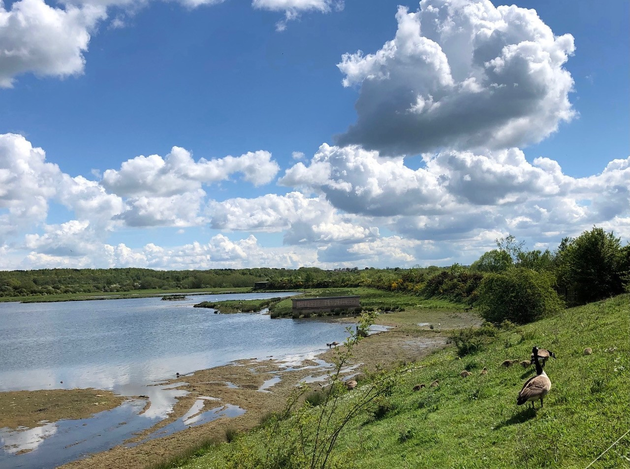 View from Wader Scrape Hide
