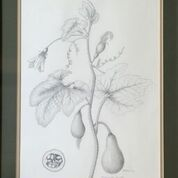 No. 18 Ornamental Gourds