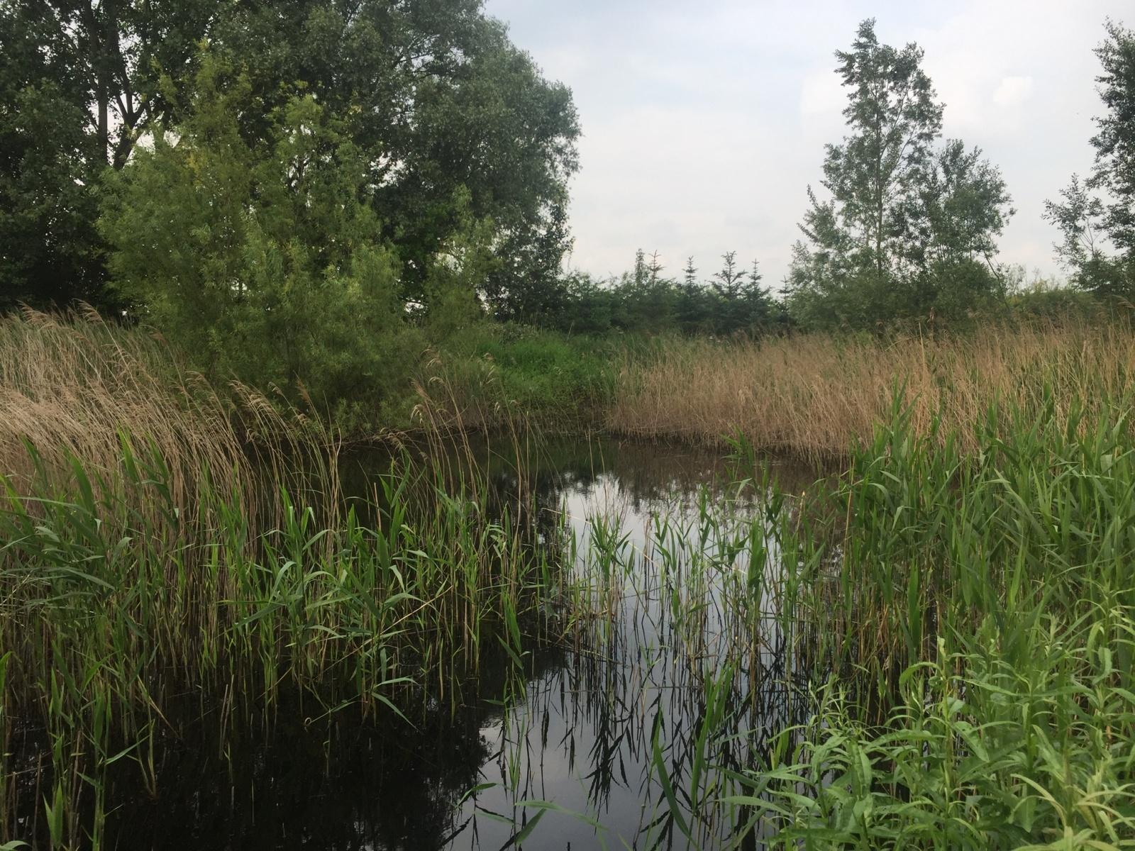 Pond on Broad Oak farm