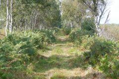 Thorne Moor, Collis Tram