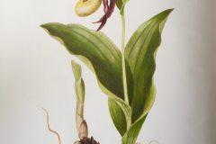 Lafy's Slipper by Hilda Godfery