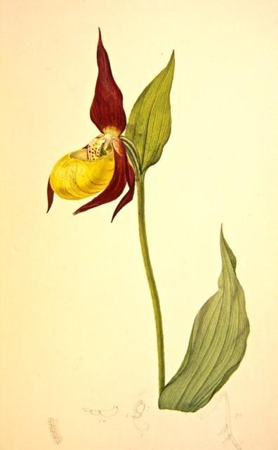 7n John Curtis 1832