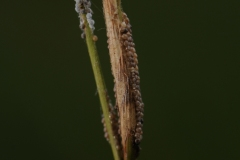 Eggs on Tor Grass