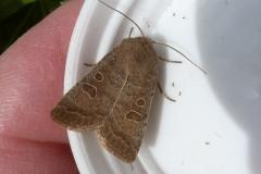 20200518 Moth