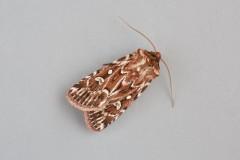 Lycophotia porphyrea - True Lover's Knot, Austerfield.