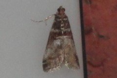 Acrobasis, Cusworth Lane, Doncaster
