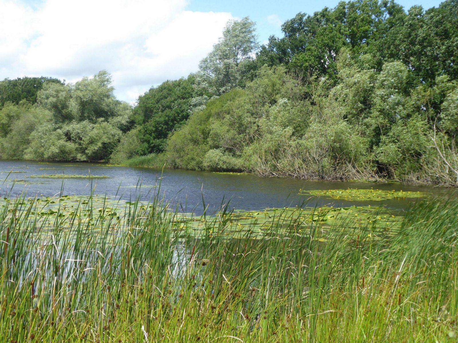 Applehurst Pond, Thorpe Marsh
