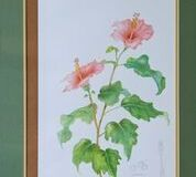 No. 11 Hibiscus sp.