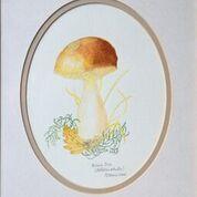 No. 22 Penny Bun (Boletus edulis) Potteric Carr