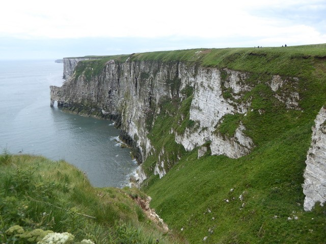 Looking south toward the gannetry., Bempton Cliffs