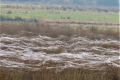 Layers of spider webs. RSPB Adwick Washlands.