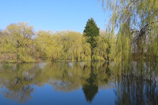 Highfields-Lake